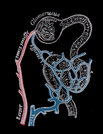 histology of nephron