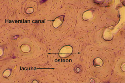 Histology World Key Histology Features