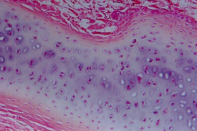 Histology World Key Histology Features